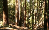 """Scientists push back against """"Trillion Trees"""" initiatives"""