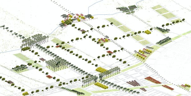Axonometric depicting an expanding city of botanical identity and cultural appropriation
