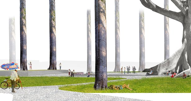 Elevating of Macondo tree on both symbolic and poetic pedestal reversing its cultural association with solitude. Undulating lines of the base of the Ceiba are seemlessly integrated into the plaza design