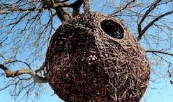 Birds were the original architects