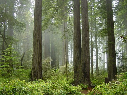Redwood National Park in California. Photo courtesy Wikimedia user Michael Schweppe.