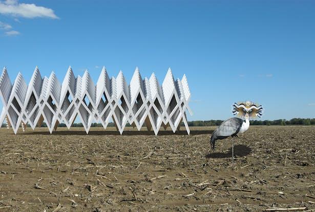 The Masquerading Crane