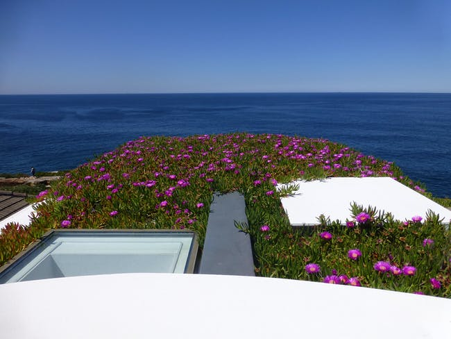 Roof with Flowers. Seacliff House by Chris Elliott Architects. Photo © CEA