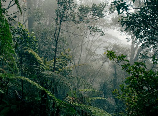 View of the rainforest in Kinabalu Park, Borneo. Image courtesy of Wikimedia Commons / Dukeabruzzi.