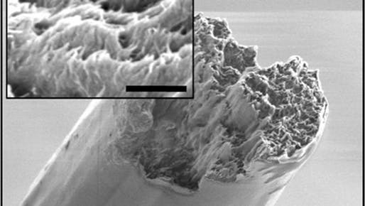 Electron microscope image of the cellulose nanofiber material derived from wood, now the strongest biomaterial ever made. Image: KTH Royal Institute of Technology.