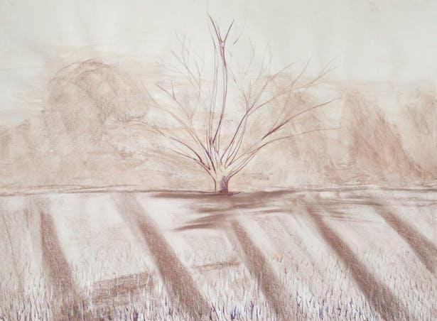 Tree, Bamboo and inc