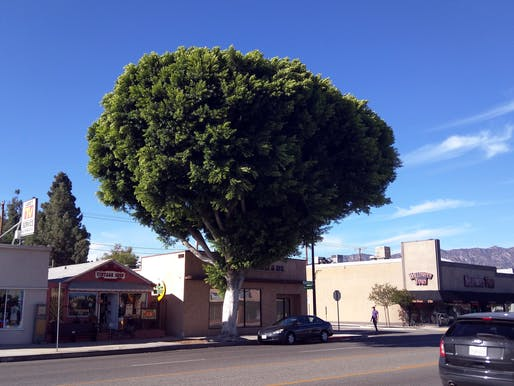 Los Angeles has hired its first-ever city forester. Image courtesy of Flickr user Cory Doctorow.
