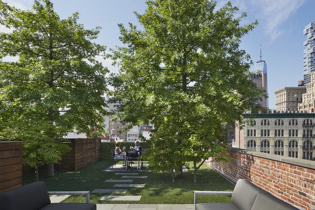 Rooftop terrace with 40' tall Oak trees