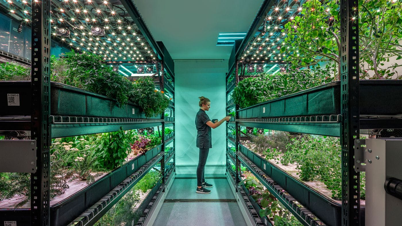 Is Vertical Farming The Future Of Agriculture News