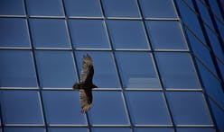 U.S. skyscrapers kill about 600 million migrating birds a year — and Chicago, Houston, and Dallas are the deadliest cities