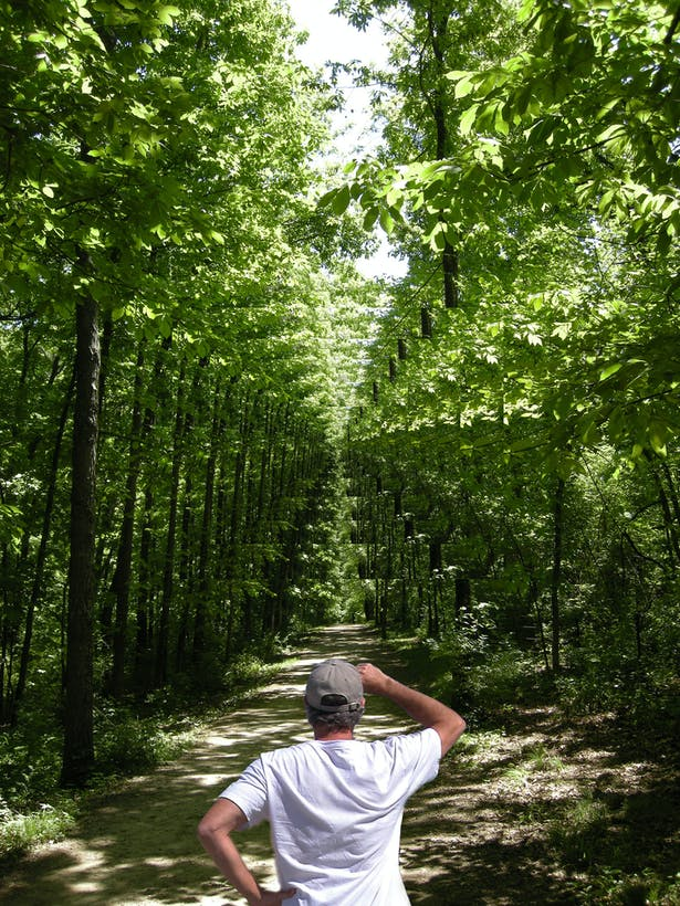 Deep Forest Portal