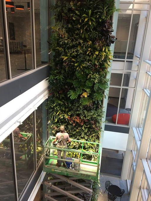 Living wall located in Davidson College. Plant Material Used: Tropicals. Living Wall System: Nedlaw Biofilter Wall. Image courtesy of Living Walls Inc.