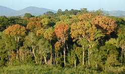 EU to pay Gabon to preserve its tropical rain forests