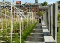 Boustrophedon Garden