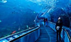 The risky business of city aquariums