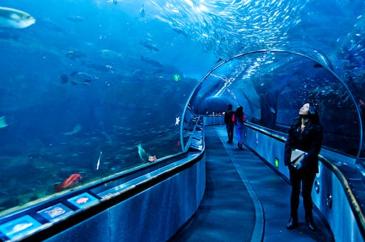 Glass tunnel at San Francisco's Aquarium of the Bay. Photo: Ray_LAC/Flickr
