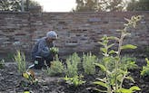 Theaster Gates leading $4.5 million revitalization of garden in Chicago's South Side