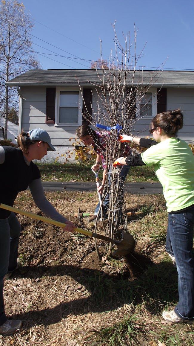 Volunteers planting a Serviceberry tree