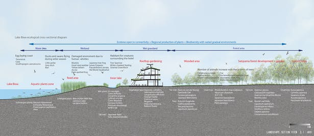 Ecotone Section Diagram