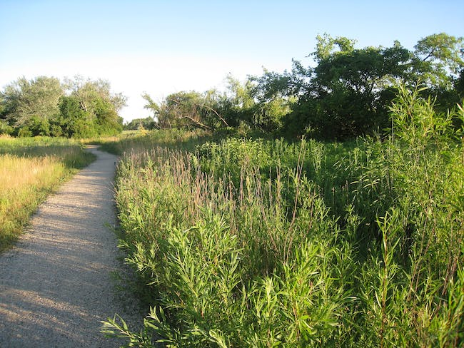 A bird trail in Jackson Park. image via wikimedia.org