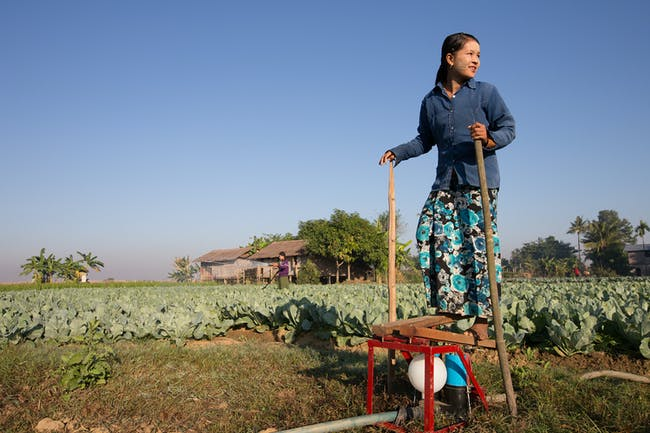 A farmer uses the Baby Buffalo pump to irrigate her crops. Credit: Tim Mitzman.