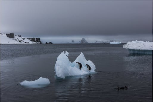 Penguins on a melting iceberg without a paddle (photo by Daniel Berehulak for the New York Times)