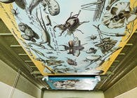 Interior Specialty- Illustrated Ceilings