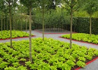 'Sharing' Garden