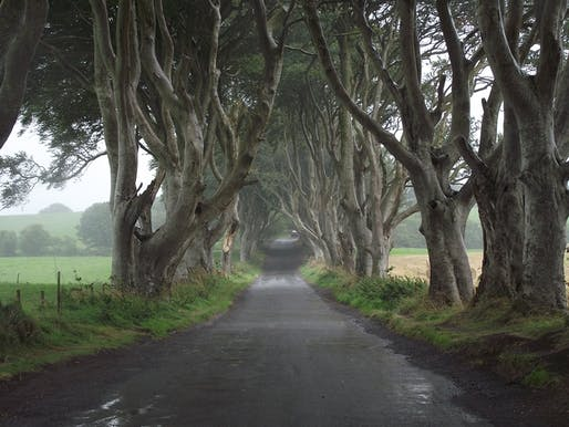 Ireland is going to plant a lot of trees. Image courtesy of Needpix.