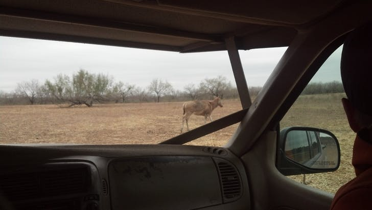 'And now we're in Africa; we're on fucking safari... Gazelles watch us with full, orphan eyes. Here they are, the descendants of vaudeville circus and roadside petting zoos, marooned a world away in West Texas.' from 'Field Transmissions from W. Texas,' published in MANIFEST 1 Credit: GRNASFCK