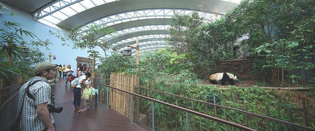 reserving the site's natural topography, the panda enclosure is served by an elevated walkway that allows encounters with the pandas at eye level