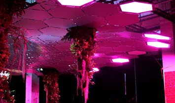 Getting down with the LED grow lights to be used in NYC's Lowline