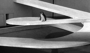 Modernist penguin pool is beyond repair, says architect's daughter