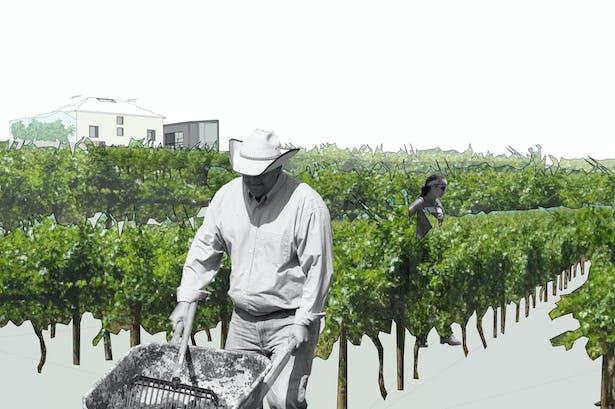 vineyards on the eastern slope