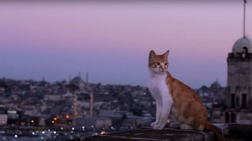 A still from Kedi. Oscilloscope