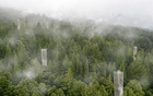 Tulane Graduate Jacob Smiley Creates 'Symbiotic Design Strategies' for Redwood Conservation