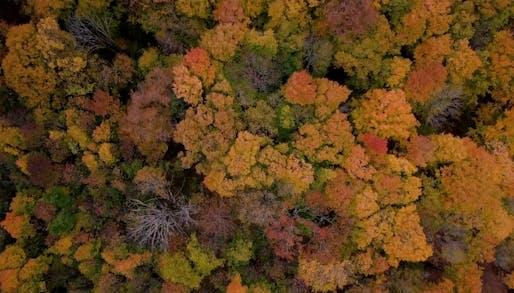 Image via Flash Forest/Kickstarter