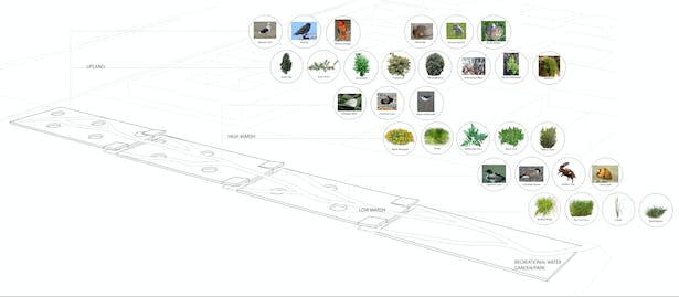 These are the plants that correspond with the different levels of the system.
