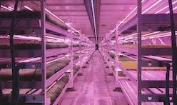 Savvy entrepreneurs grow fresh vegetables deep beneath London city streets