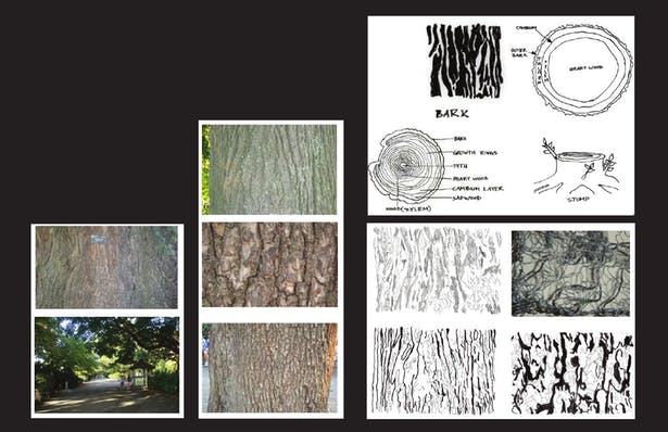 At the site there are many dienent kind of trees. Some of the trees which caught my attention are english elm, oak and cherry tree. What really interest me from the site isthe pattern of the trees. When I did the site visit I observethat how each of the tree has a dierent barkpattern . So I draw the crack of the bark pattern and made the birdhide Skin / wall out of the pattern