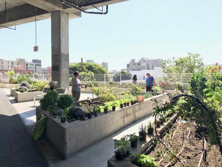 Star Apartments community garden. Image courtesy of SRHT.