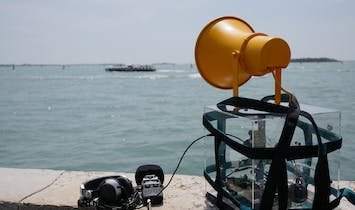 The Venice Biennale Swamp Pavilion, Part I: Swamp Radio