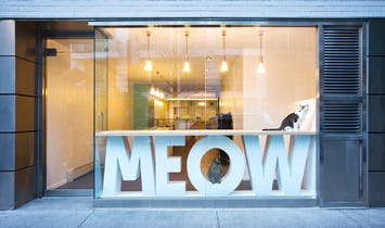 Meow Parlour is a modern hangout for NYC's adoptable cats