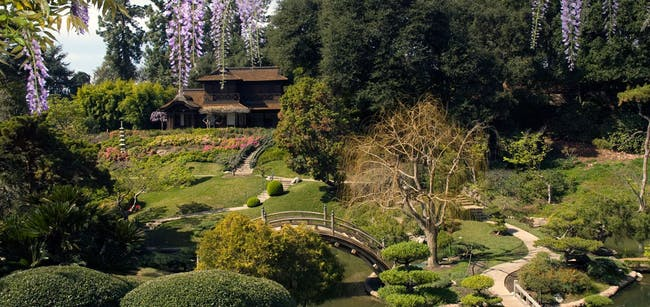 Takeo Uesugi revitalized the Japanese Garden at The Huntington Library. Image via Huntington Library.