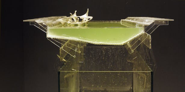 river ecosystem model with algae