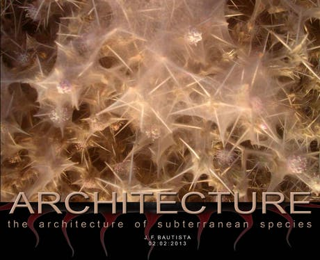 ...Architecture of subterranean species