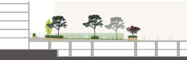 Marine Plaza Mixed Use Landscape Section