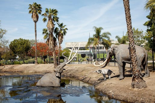 The La Brea Tar Pits in Los Angeles, Image courtesy of Natural History Museums of Los Angeles County.