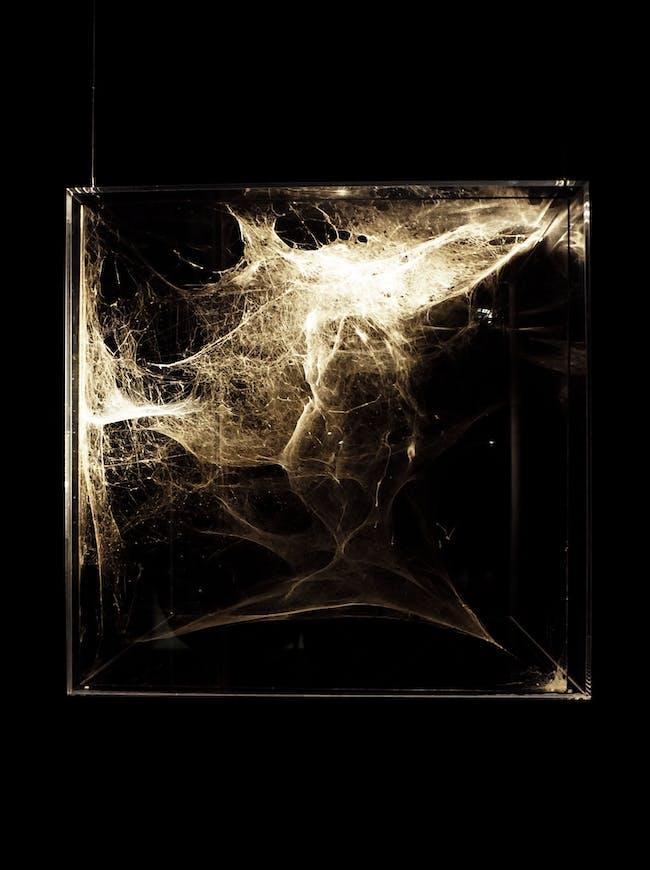 Types: Tomas Saraceno, Spider Architecture