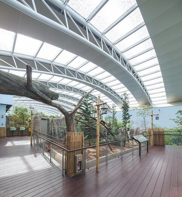 The glazed dome structure of the Giant Panda Forest encloses a temperature and humidity-controlled space that maintains a strong connection with the changing patterns of daylight